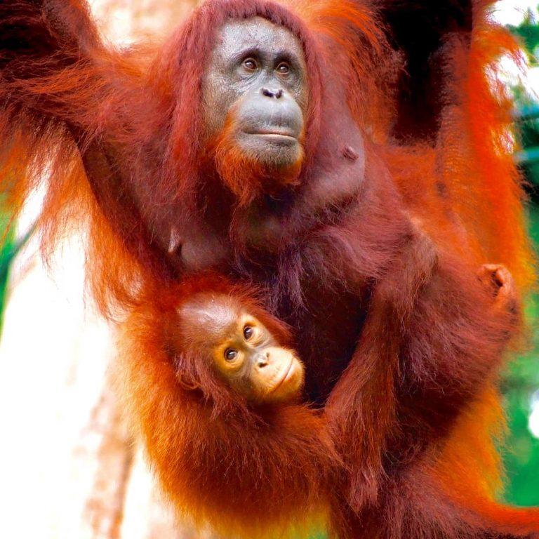 Family adventures in Borneo