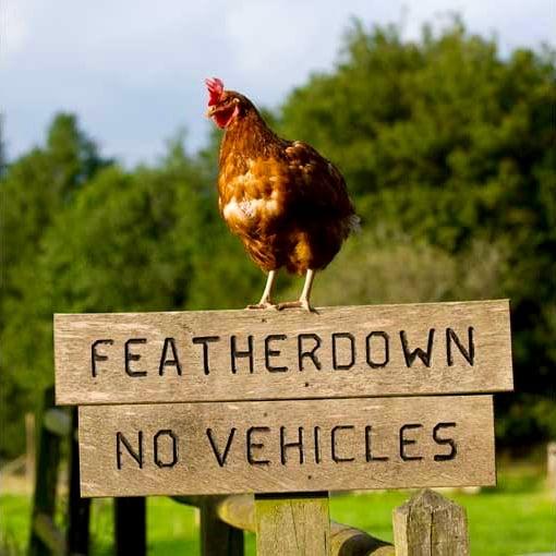 Featherdown Farms
