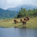 Kerala-Elephants-at-Periyar-101holidays