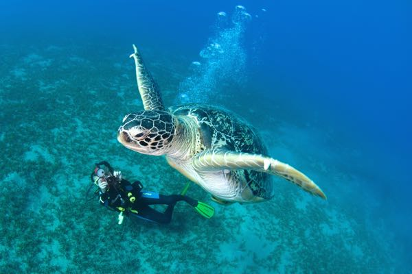 Diving holidays for solos