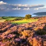 Farmhouse and pub stays in Devon