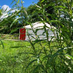 Yurts in Somerset