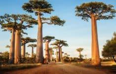 1- Madagascar