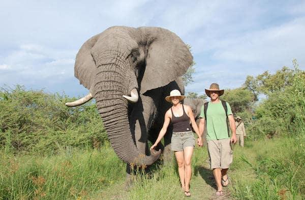 botswana-baines-camp-elephant-walk-copyright-sanctaury-retreats