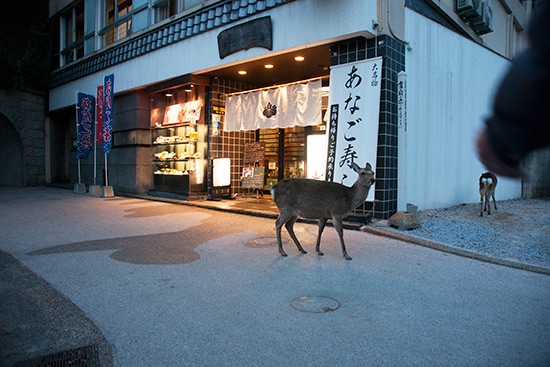 A-deer-outside-the-Yamaichi-Bekkan,-one-of-our-favourite-low-budget-inns-on-Miyajima (1)