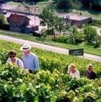 wine tours France 2012