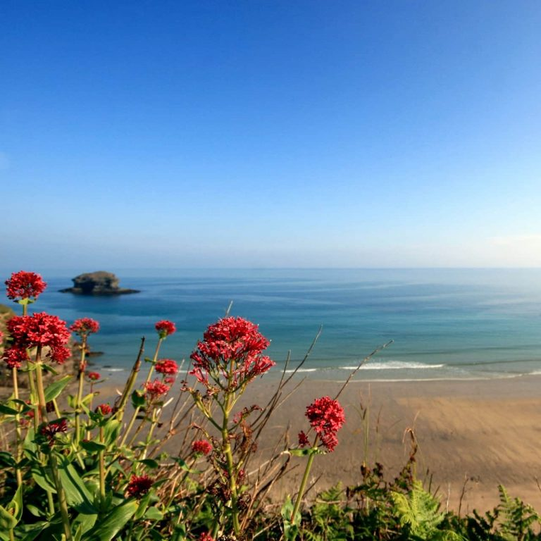 Looking out over Gull Rock, Portreath