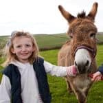 Meet the donkey