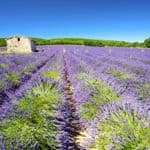 Provence landscapes
