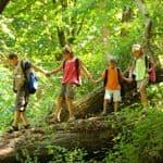 Explore woodlands