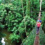 World's longest Tree-based Canopy Skywalk in Mulu National Park, Sarawak