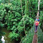 World's longest Tree-based Canopy Skywalk in Mulu National Park, Sarawak