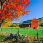 Rolling hillside country of New England with majestic sugar maple and barn, USA