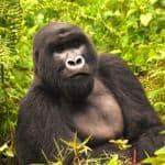 Rwanda - Virunga Lodge