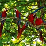 Colourful birdlife