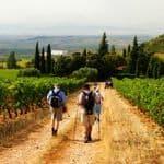 Walking through vineyards