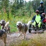 Husky scooter in the Taiga