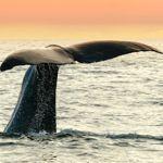 Whale watching in Kaikara