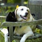 Look after beloved pets