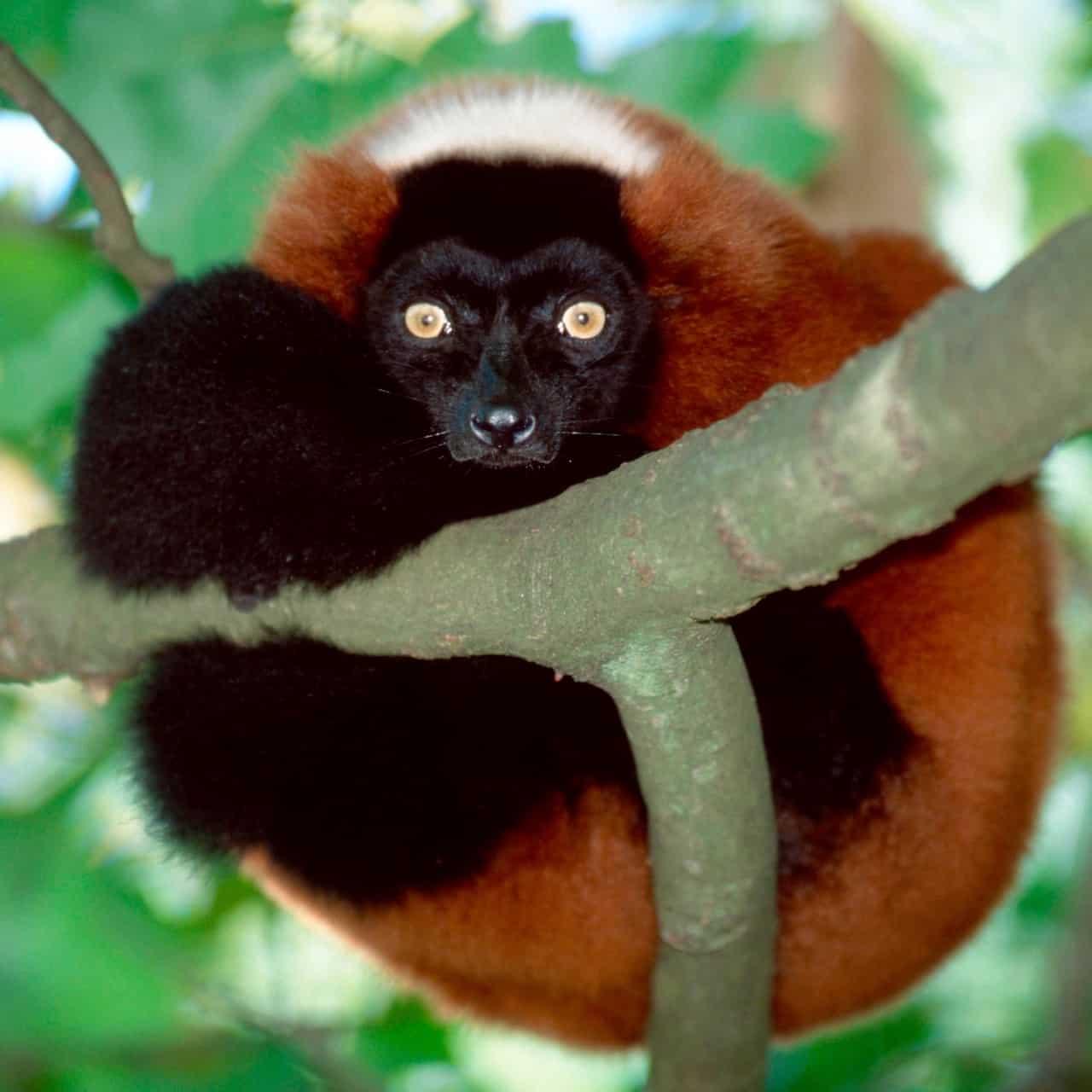 Madagascar singles