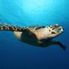 great-diving-and-snorkelling-in-the-cayman-islands