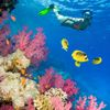 snorkelling-in-the-red-sea